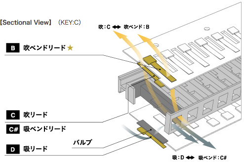 【Sectional View】(KEY:C)